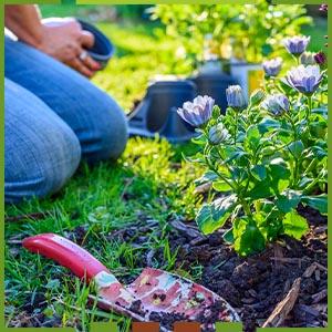 Gartenplanung startseite