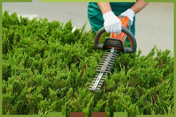 Der reibungslose Ablauf für die neue Gartengestaltung Wien