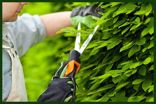 Gartengestaltung Wien – Ihr Garten ist in professionellen Händen!