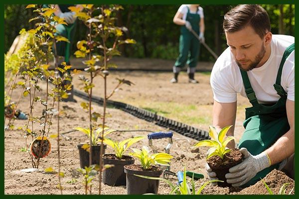 Ideen für Gartengestaltung Wien – Welche Pflanzen sollten Sie in Ihren Garten stellen?