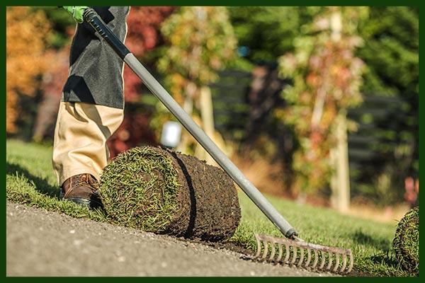 Ideen für Gartenpflanzen
